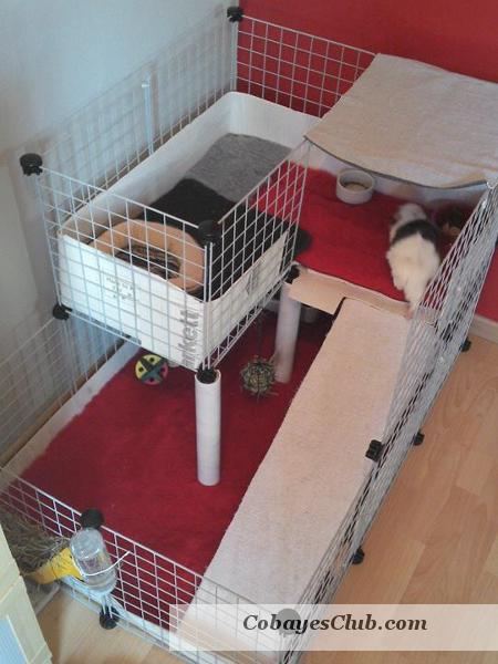 cavy cage cochon d'inde