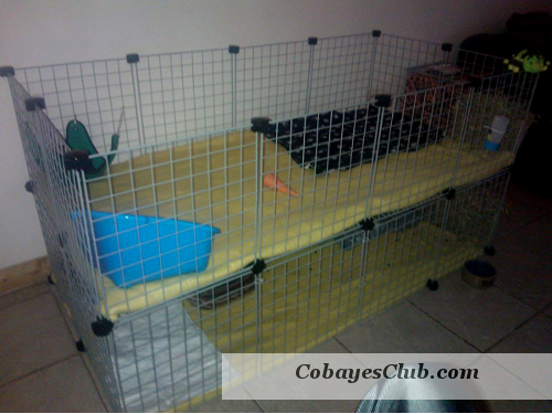 cavy cage cochon d 39 inde. Black Bedroom Furniture Sets. Home Design Ideas