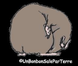 coprophagie ( et non pas caecotrophie) chez le cochon d'Inde